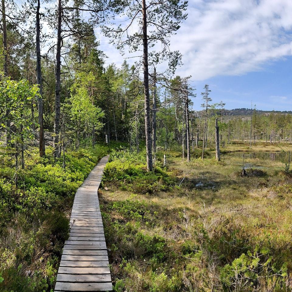 Västernorrland IMG_20190607_095914