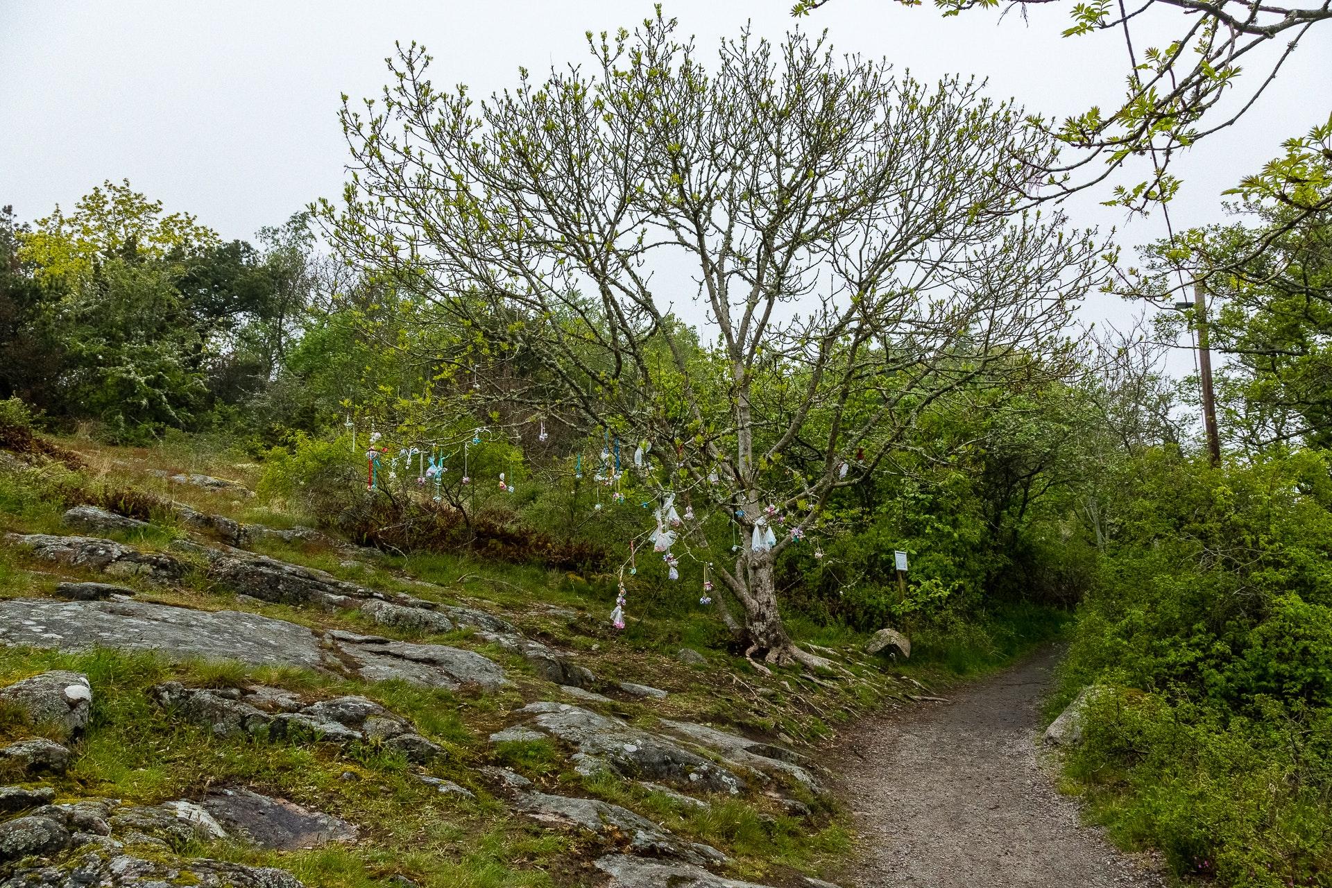 Pacifier Tree at Trollskogen