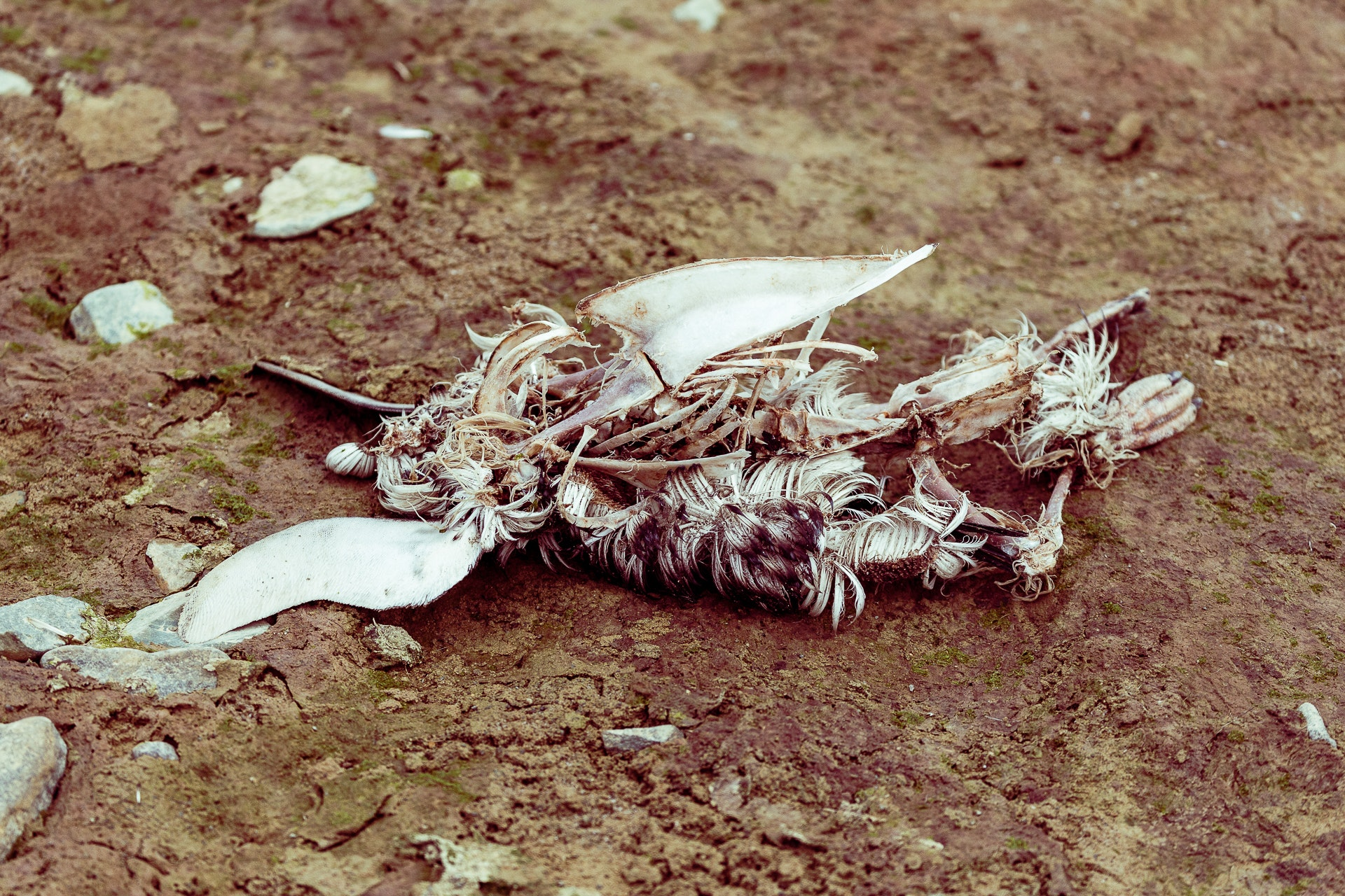 Penguin corpse