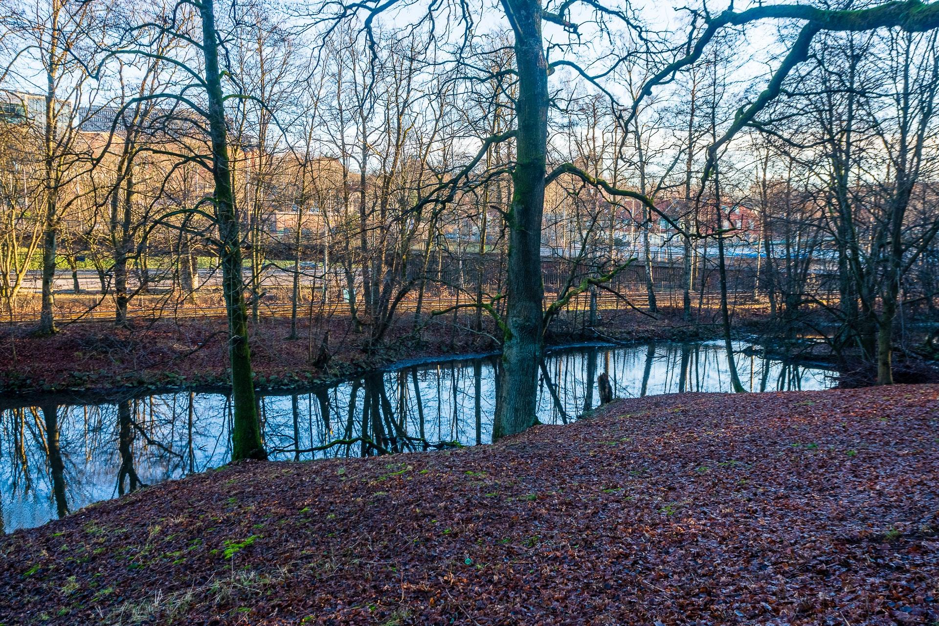 Duck Pond in Slottskogen