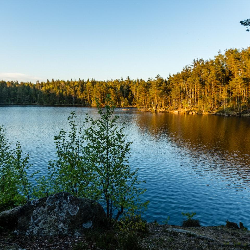 A Tog's Trek - Stora Kroksjön i Vättlefjälls Naturreservat
