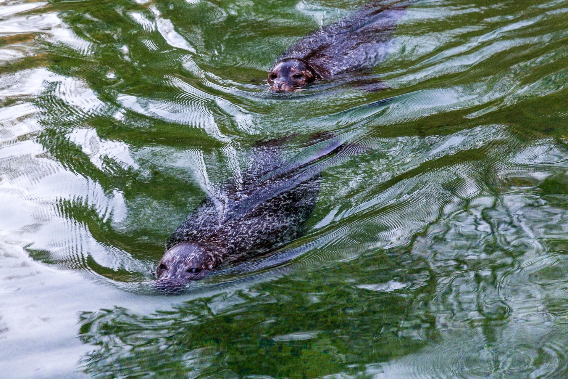 Seals in Slottskogen