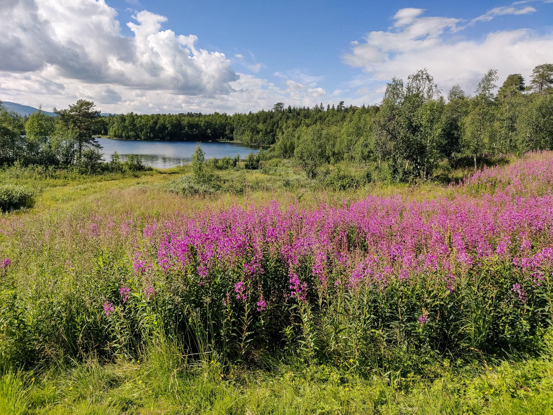 View from Vuonatjviken