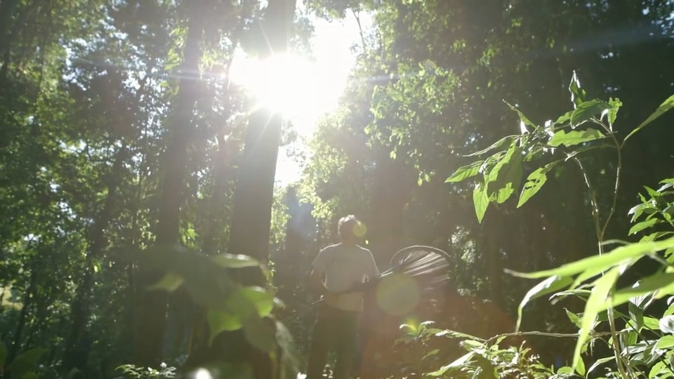 Google Stories 'The Lost Forest of Mount Mabu'