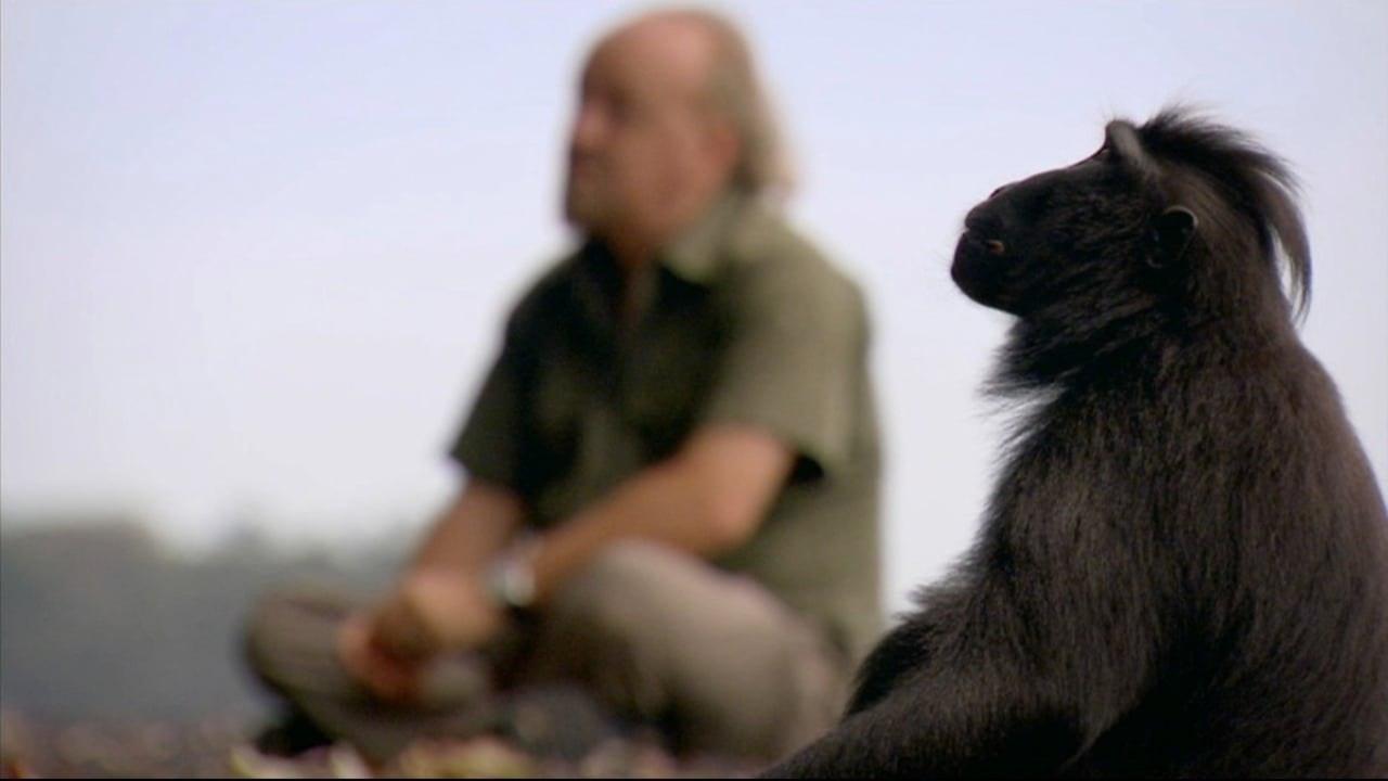Bill Bailey's Jungle Hero