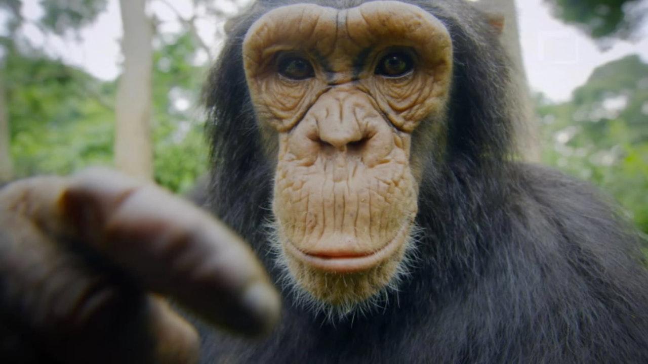 Monkeys, An Amazing Animal Family