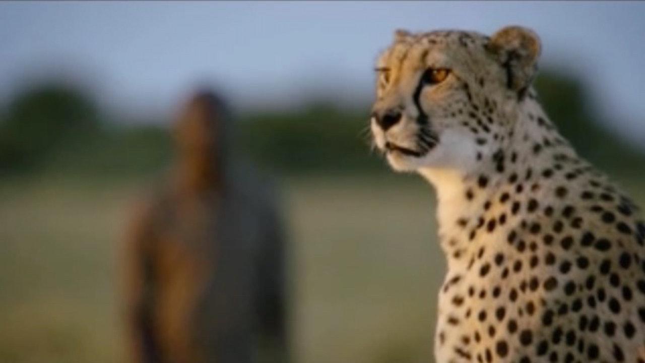 Super Senses: The Secret Power Of Animals; Sight