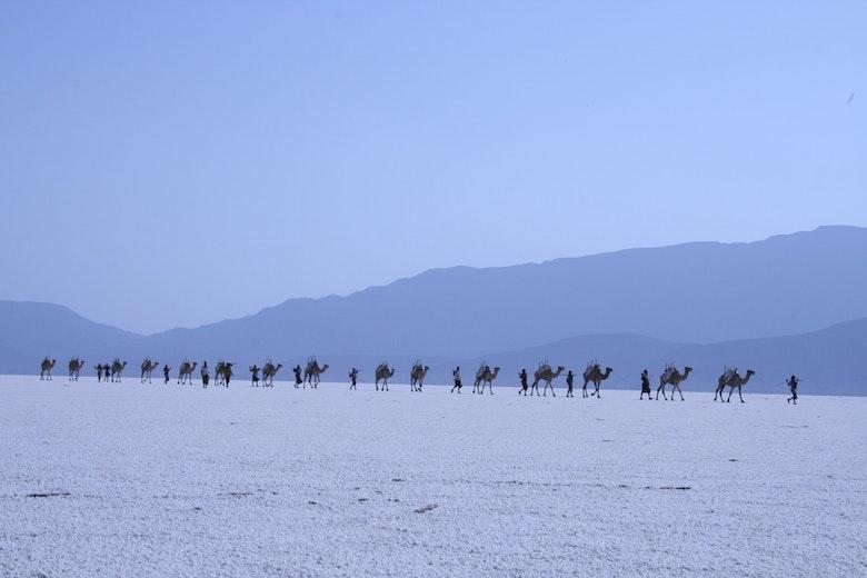 Afar Nomads, Djibouti