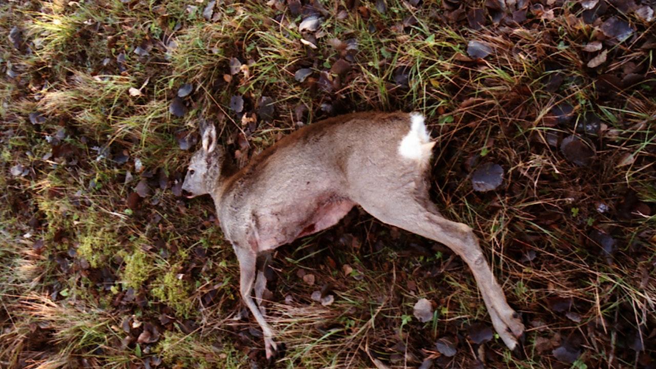 Hunter -
