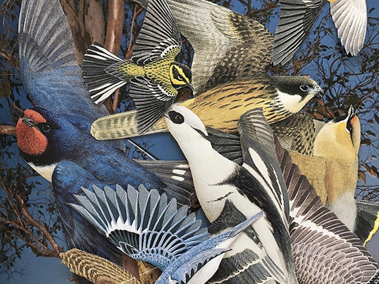 Ornitholorgy