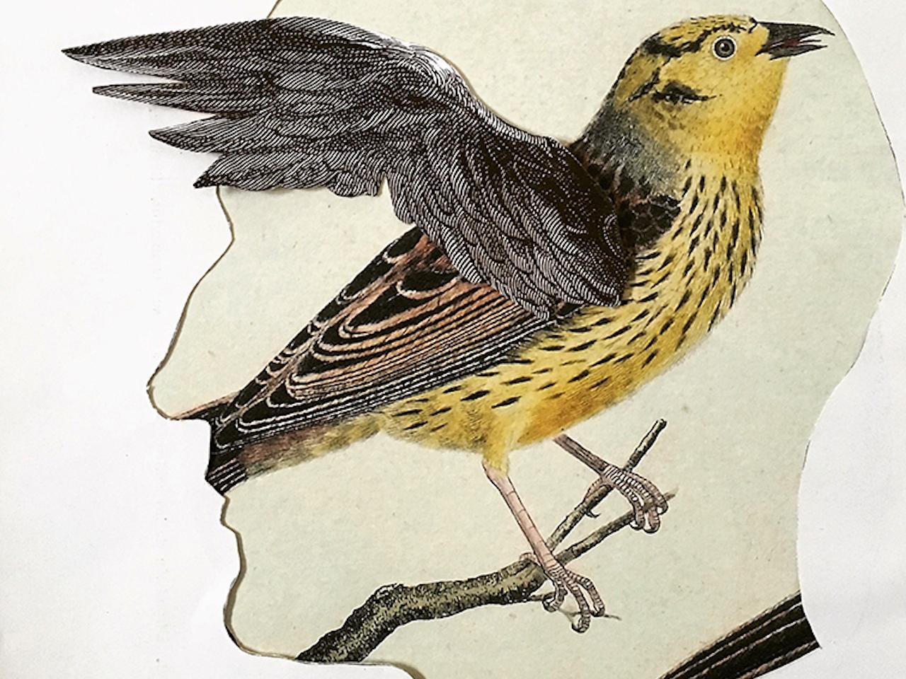 Release your birds