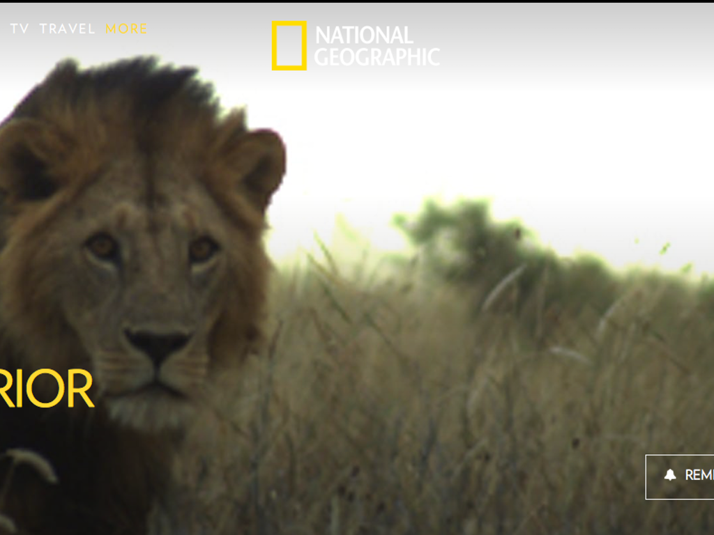 LION WARRIORS  NAT GEO WILD