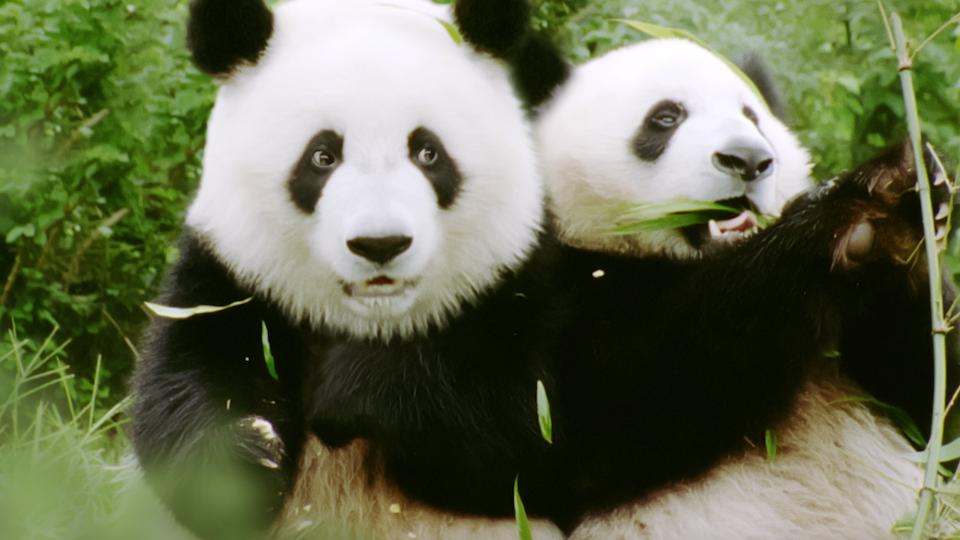 Ano Novo Chinês - Screen Shot 2020-01-29 at 13.17.08