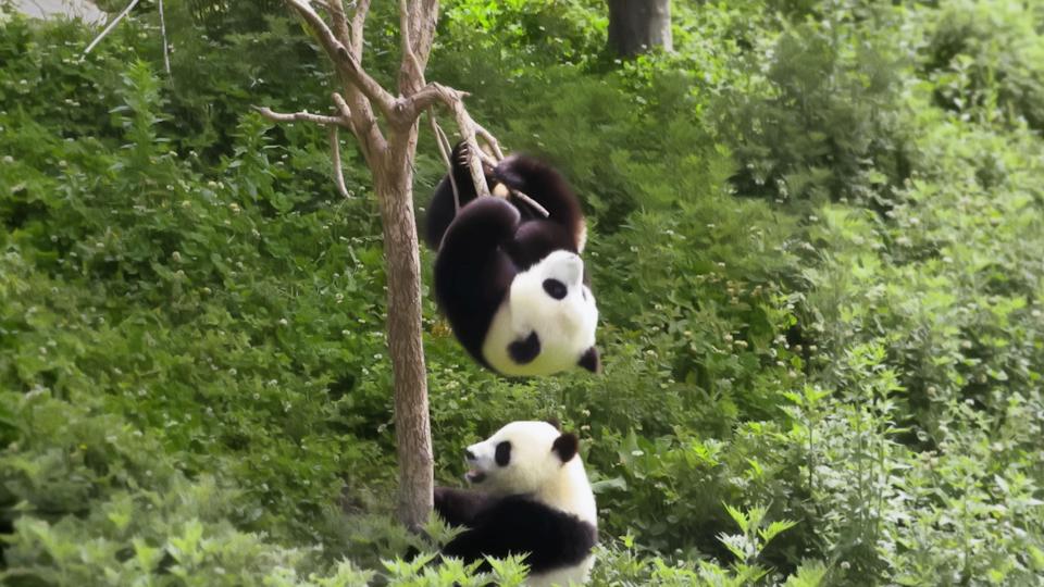 Ano Novo Chinês - Screen Shot 2020-01-29 at 13.17.42