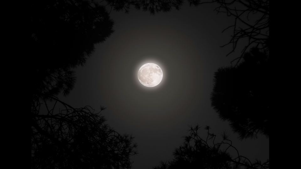 Noite - Screenshot 2021-04-28 at 11.29.59