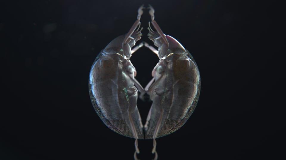 Glassworks - Carlos Cortés - 'Khepri'
