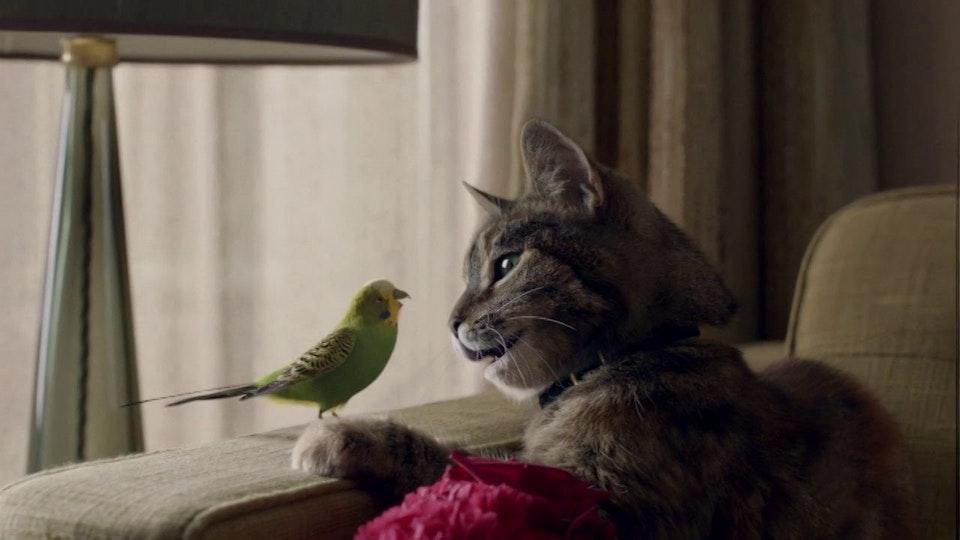 Glassworks - Freeview - Love - 'Cat & Budgie'