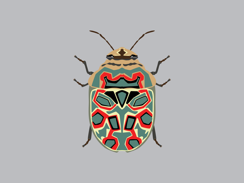 Bugs - Picasso Bug
