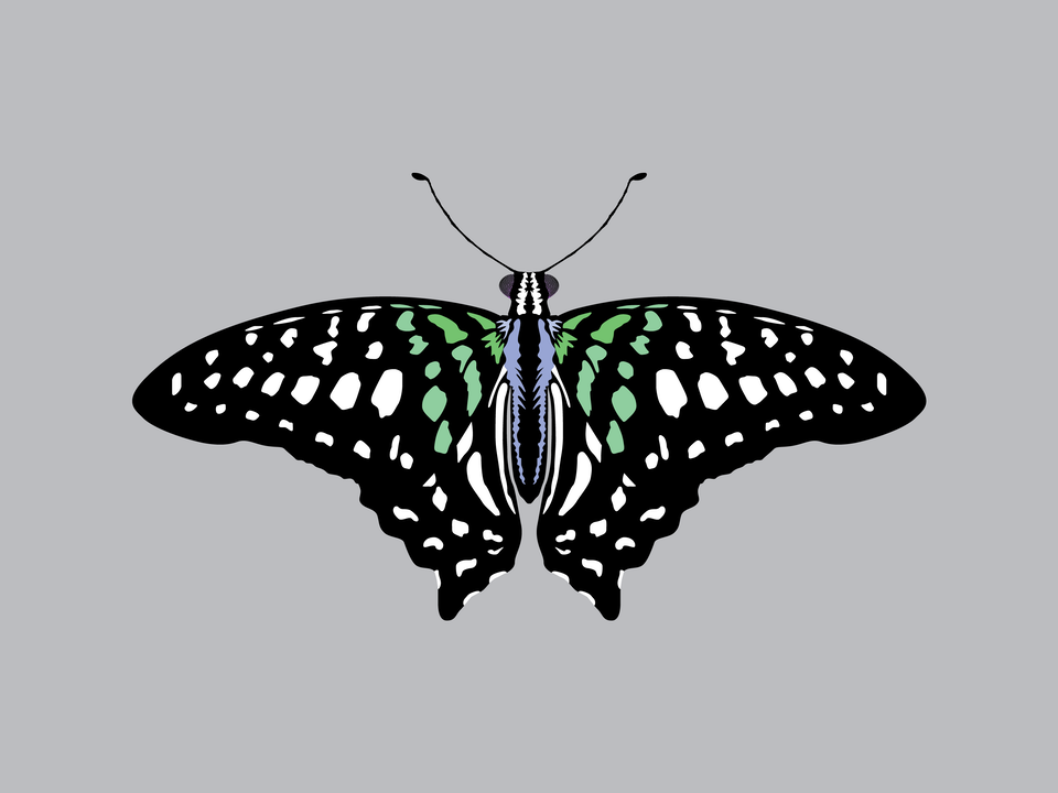 Bugs - Tailed Jay