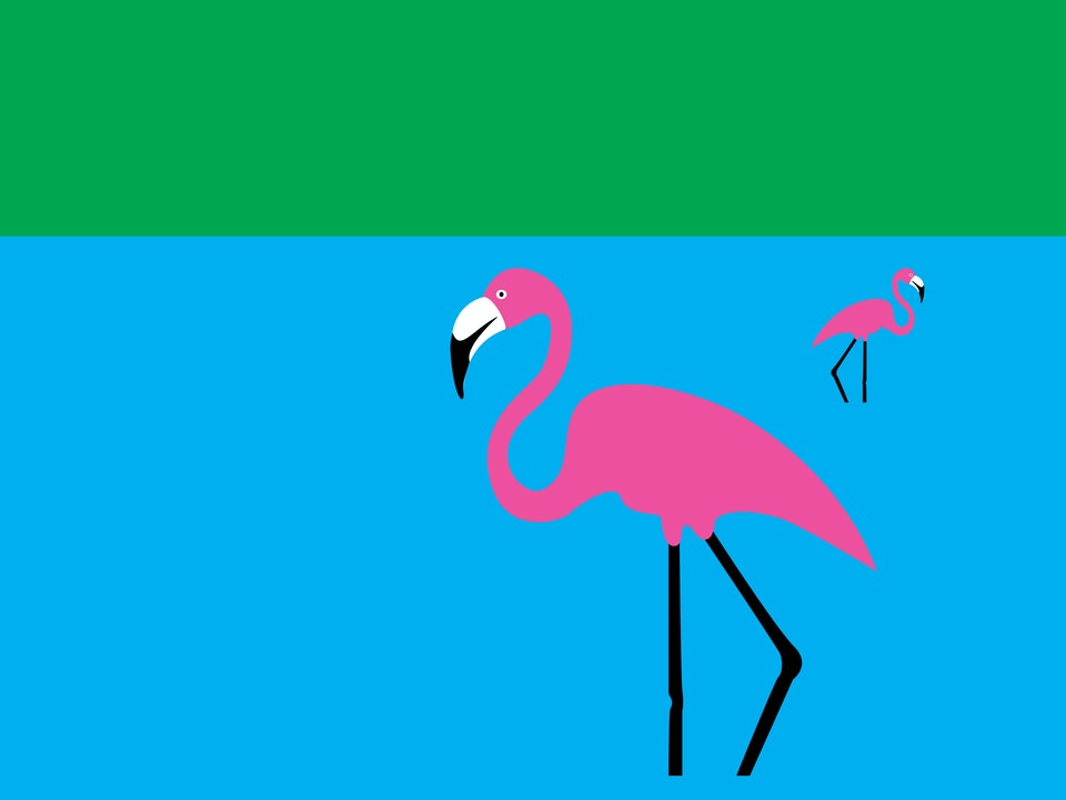 Birds - Flamingo