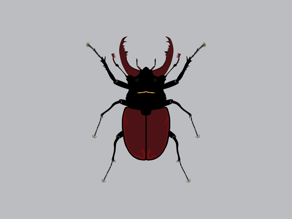 Bugs - Stag Beetle
