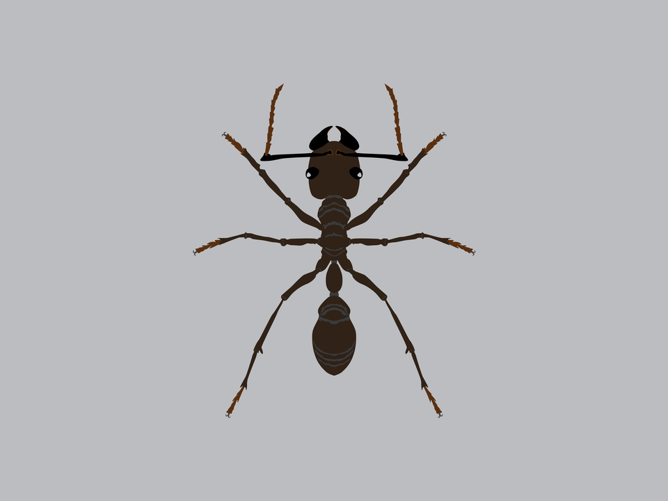 Bugs - Bullet Ant