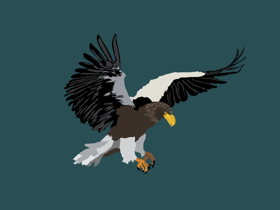 Birds - Steller's Sea Eagle