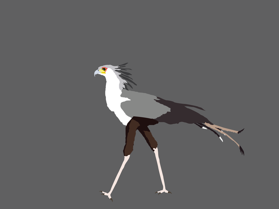 Birds - Secretary Bird