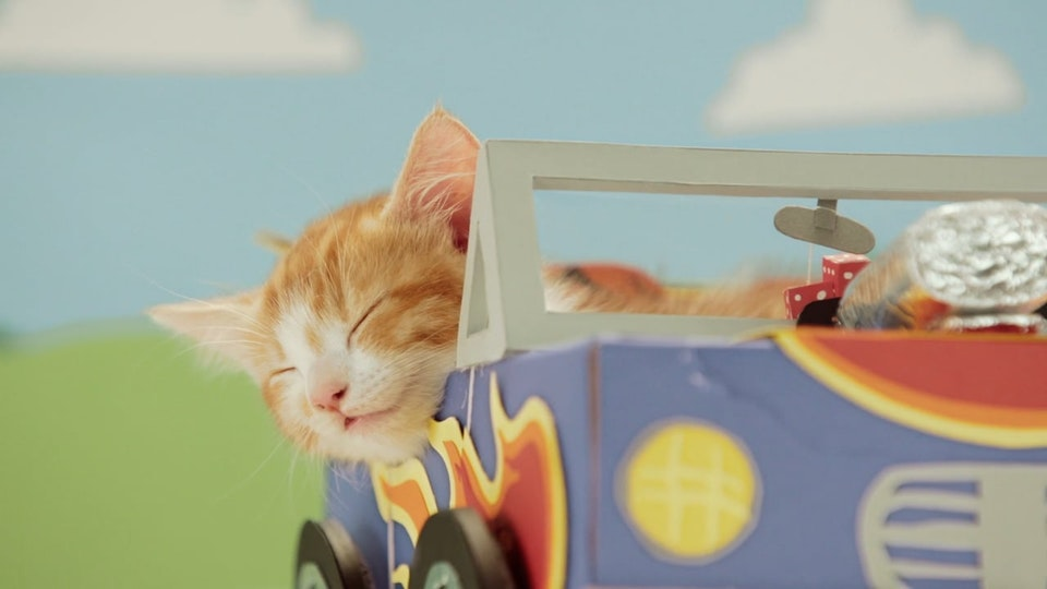 Compare The Market - Modified Cars. With Kittens.