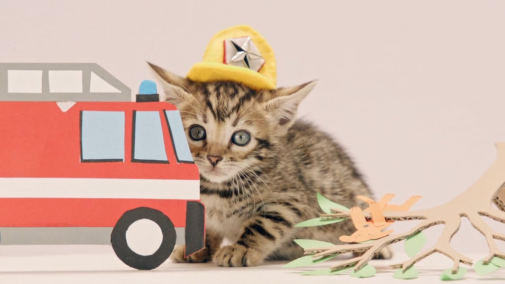 Compare The Market - Does my job affect my car insurance With kittens.