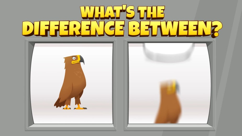 WHAT'S THE DIFFERENCE BETWEEN A GOLDEN EAGLE AND...
