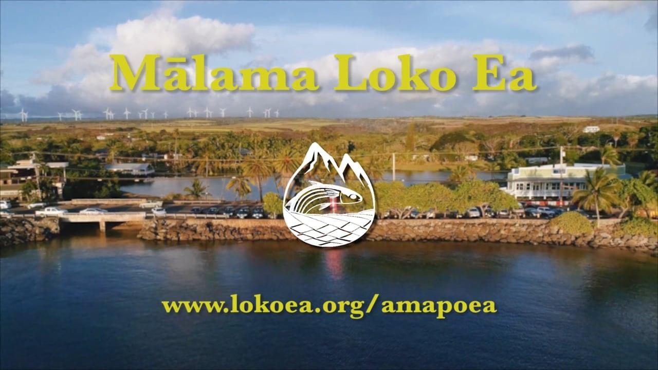 ʻAmapō Ea - A Fundraising Initiative Moving Loko Iʻa Forward Together