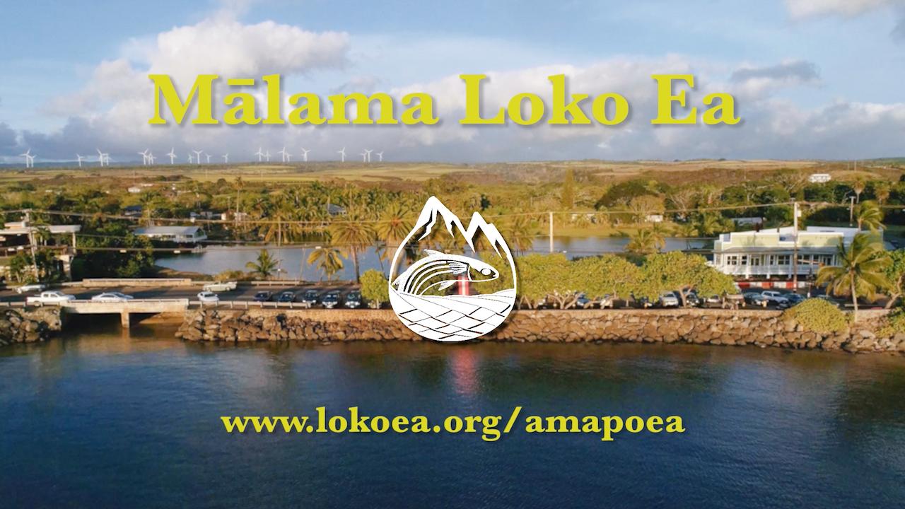 Mālama Loko Ea - Restoring a Fishpond