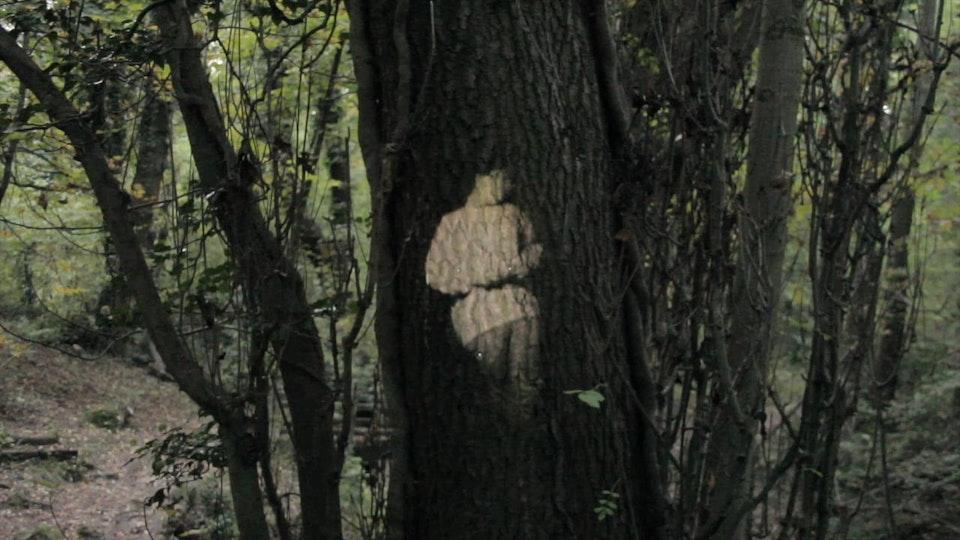 Infinity/ Spirit of the woods