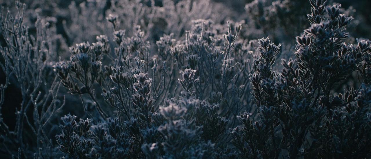 Merivale | Essential Elements