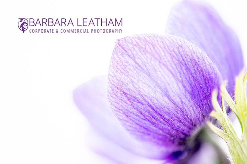 Spring Floral Fine Art Photography