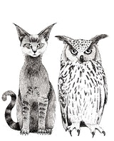 Cat & Owl Films