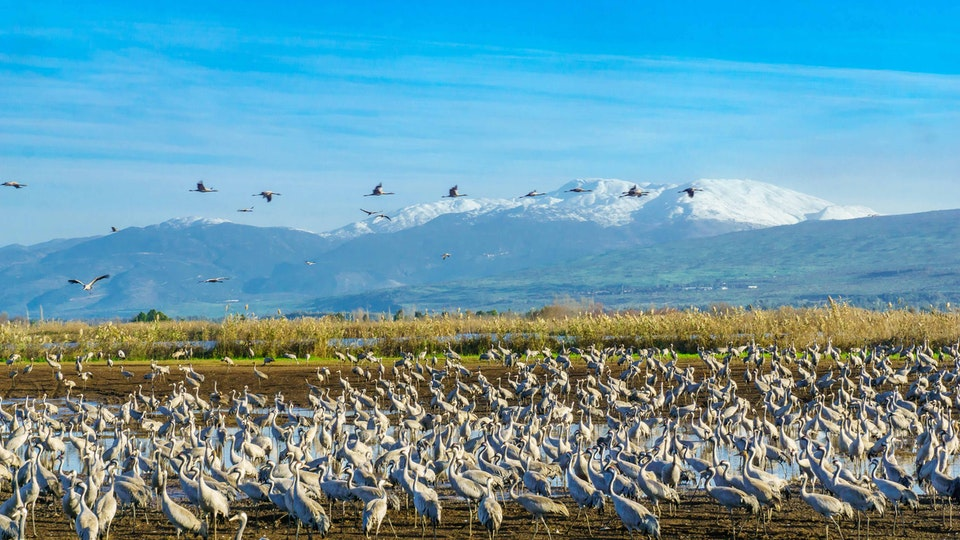 NORTH Locations - Hula Valley