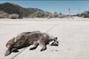 Dead Petz - Photograph Pyramid Lake, CA 2018