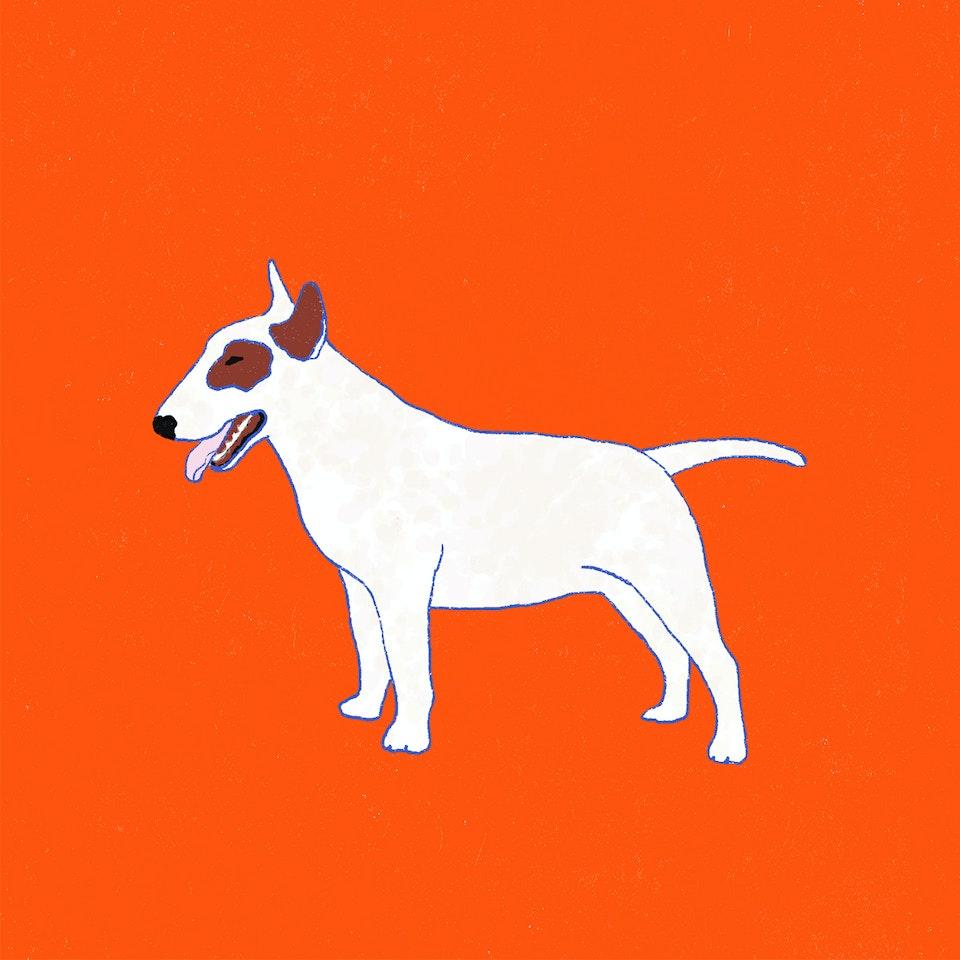 Dogs Milica-Golubovic-BullTerrier-web