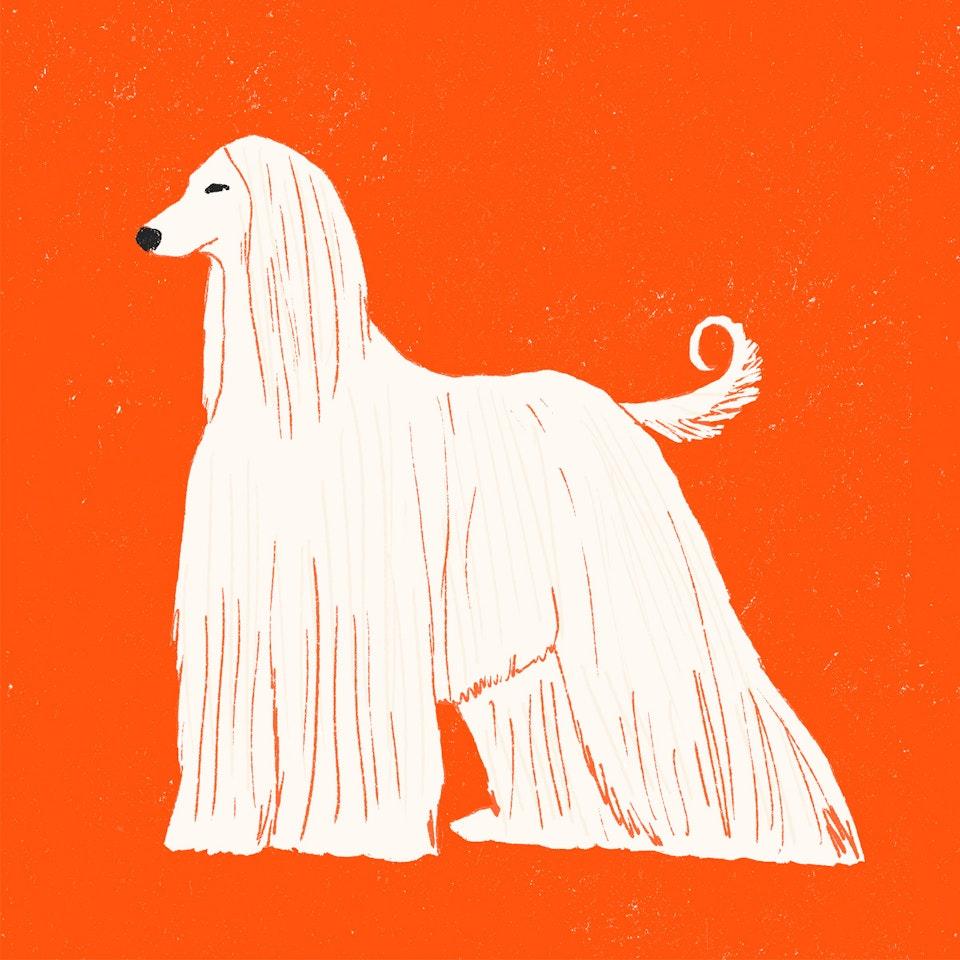 Dogs Milica-Golubovic-aHound-web