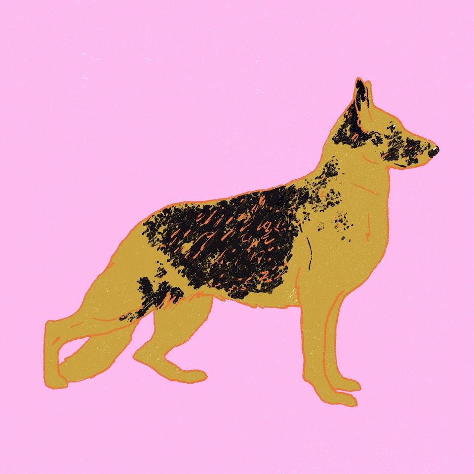 Dogs Milica-Golubovic-GermanShepherd-web