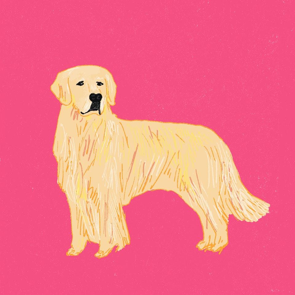 Dogs Milica-Golubovic-Golden Retriever r-web