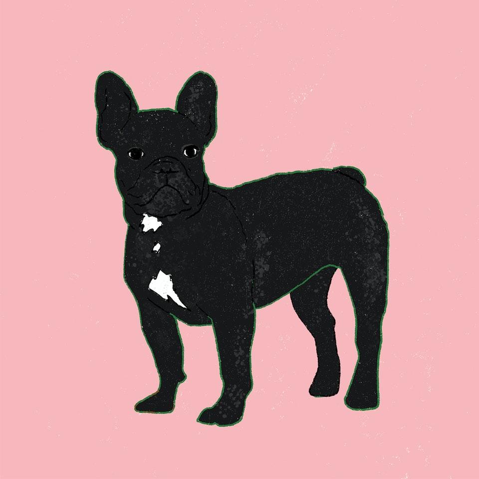 Dogs Milica-Golubovic-French-bulldog-web