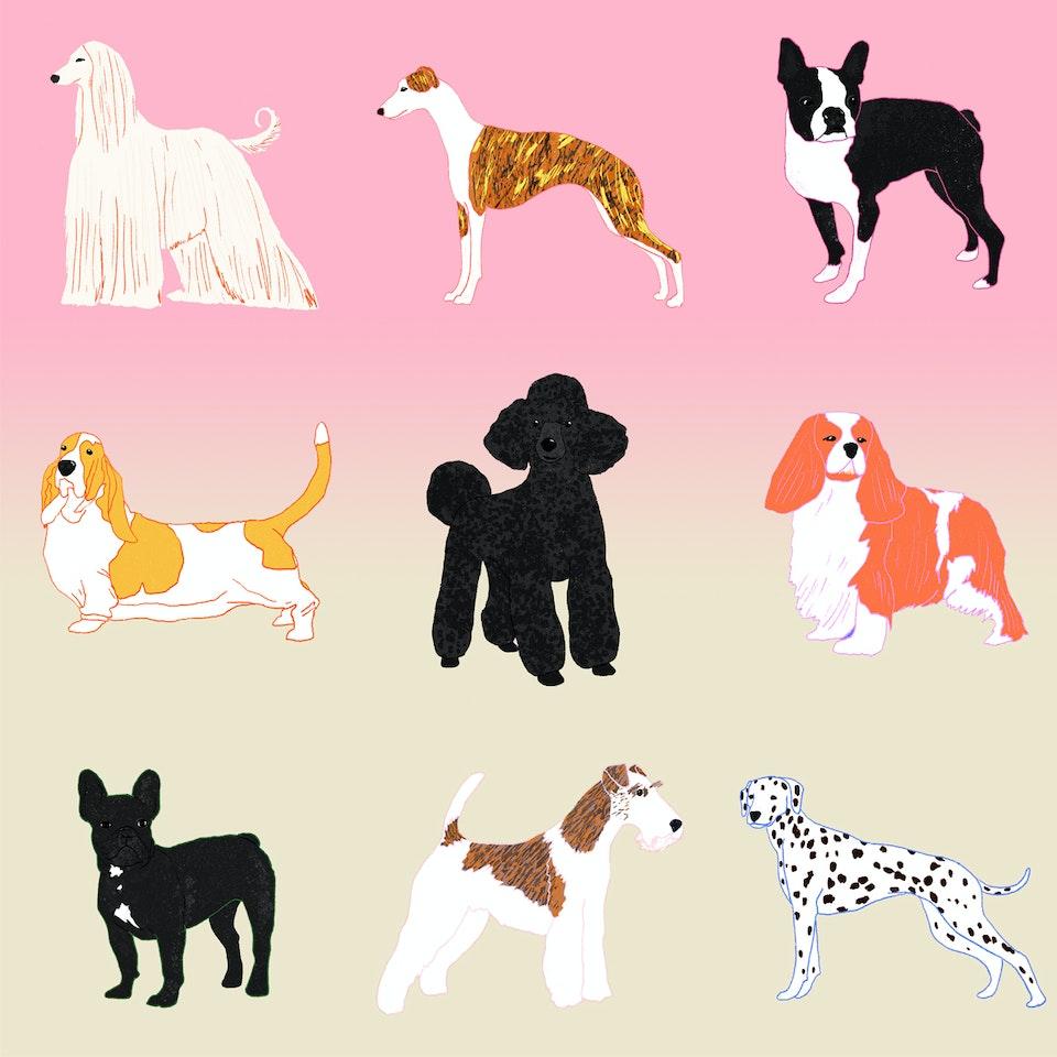 Milica Golubovic - Dogs