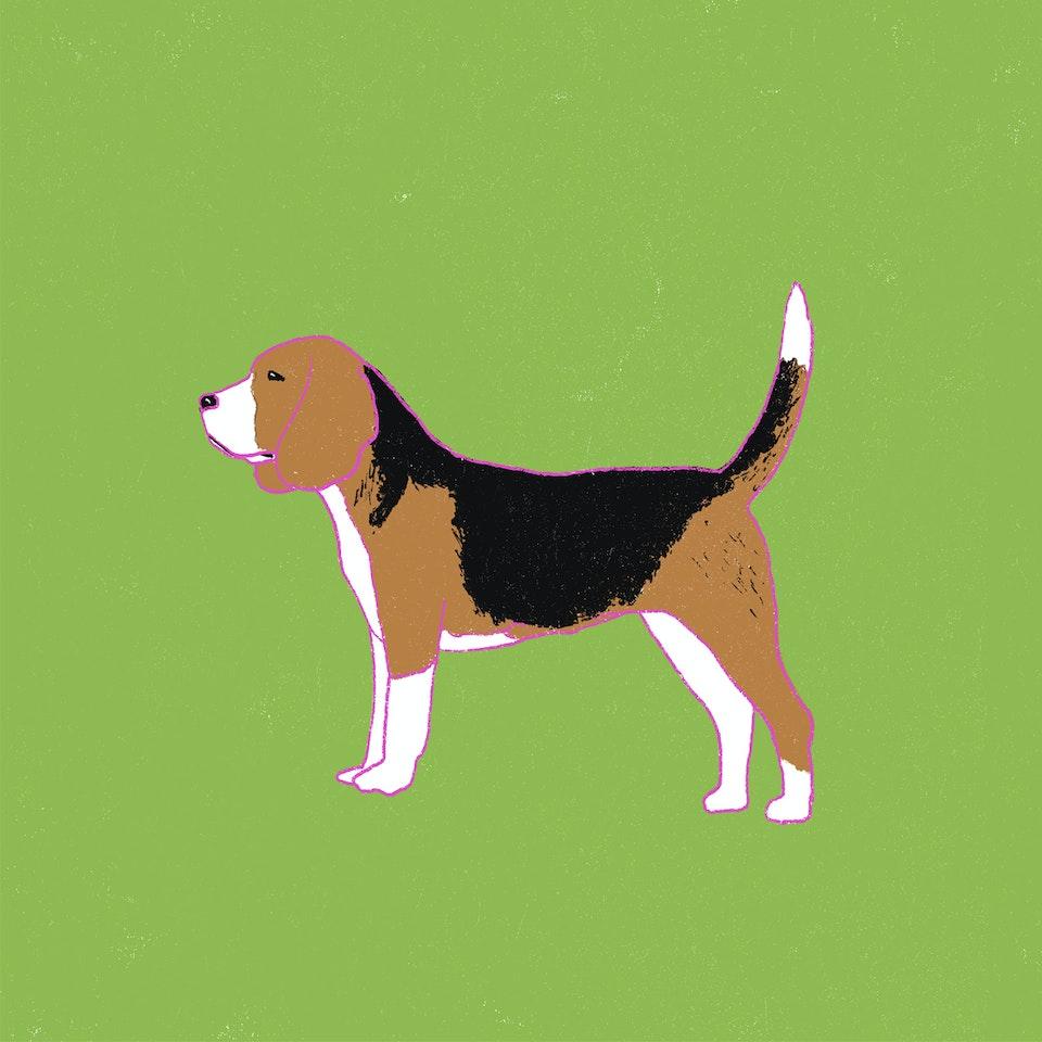 Dogs Milica-Golubovic-Beagle-web
