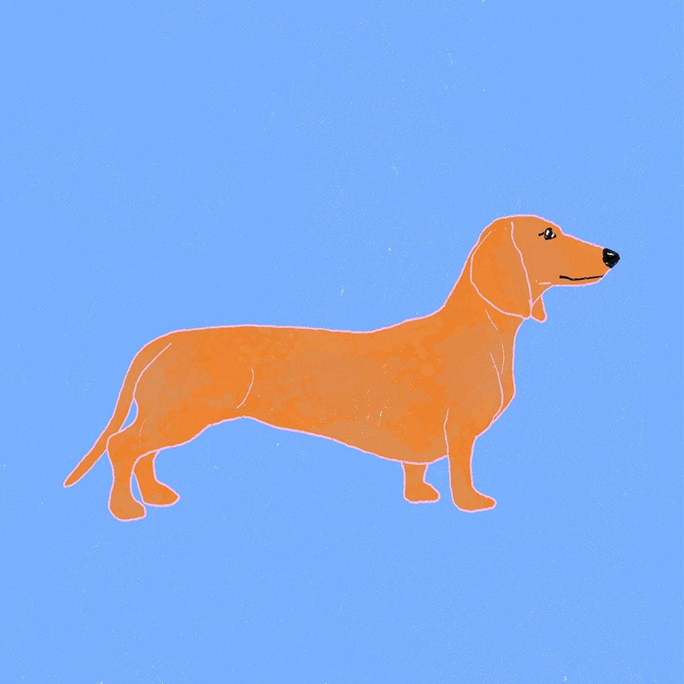 Dogs Milica-Golubovic-Dachshund-web