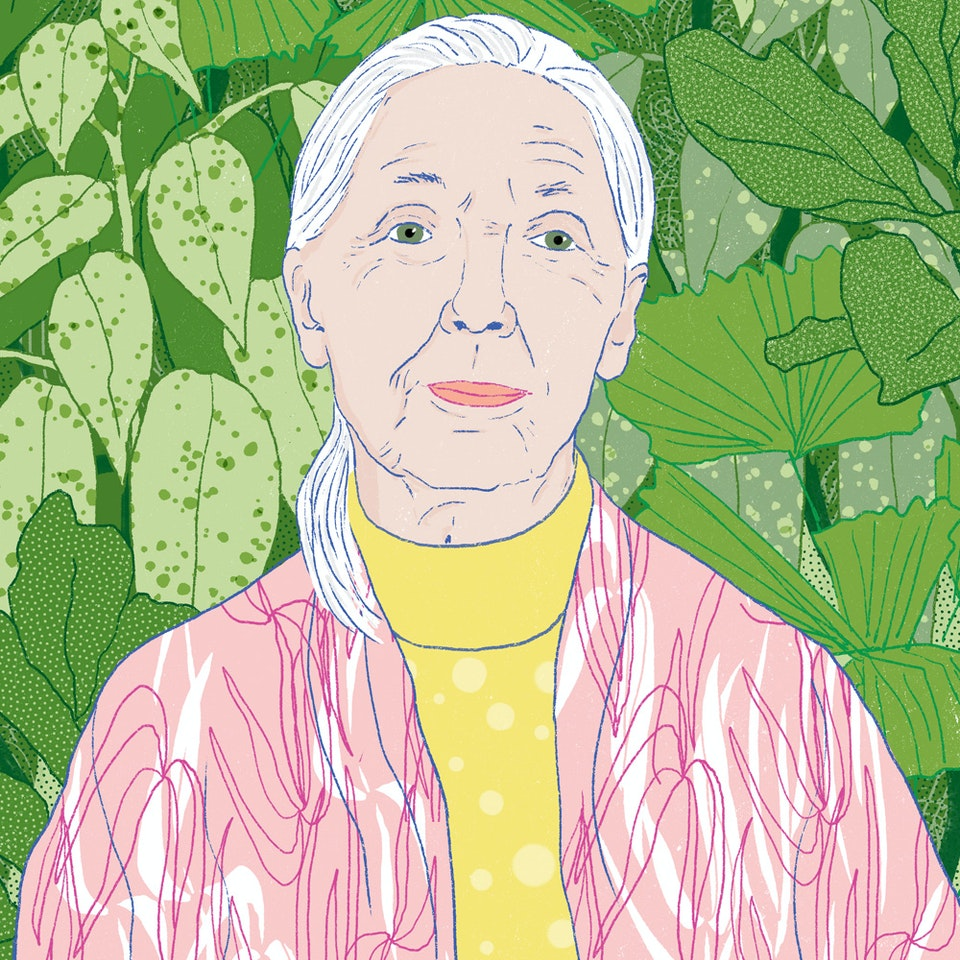 Portraits  | Commissioned and Personal work Milica_Golubovic_JaneGoodall_web