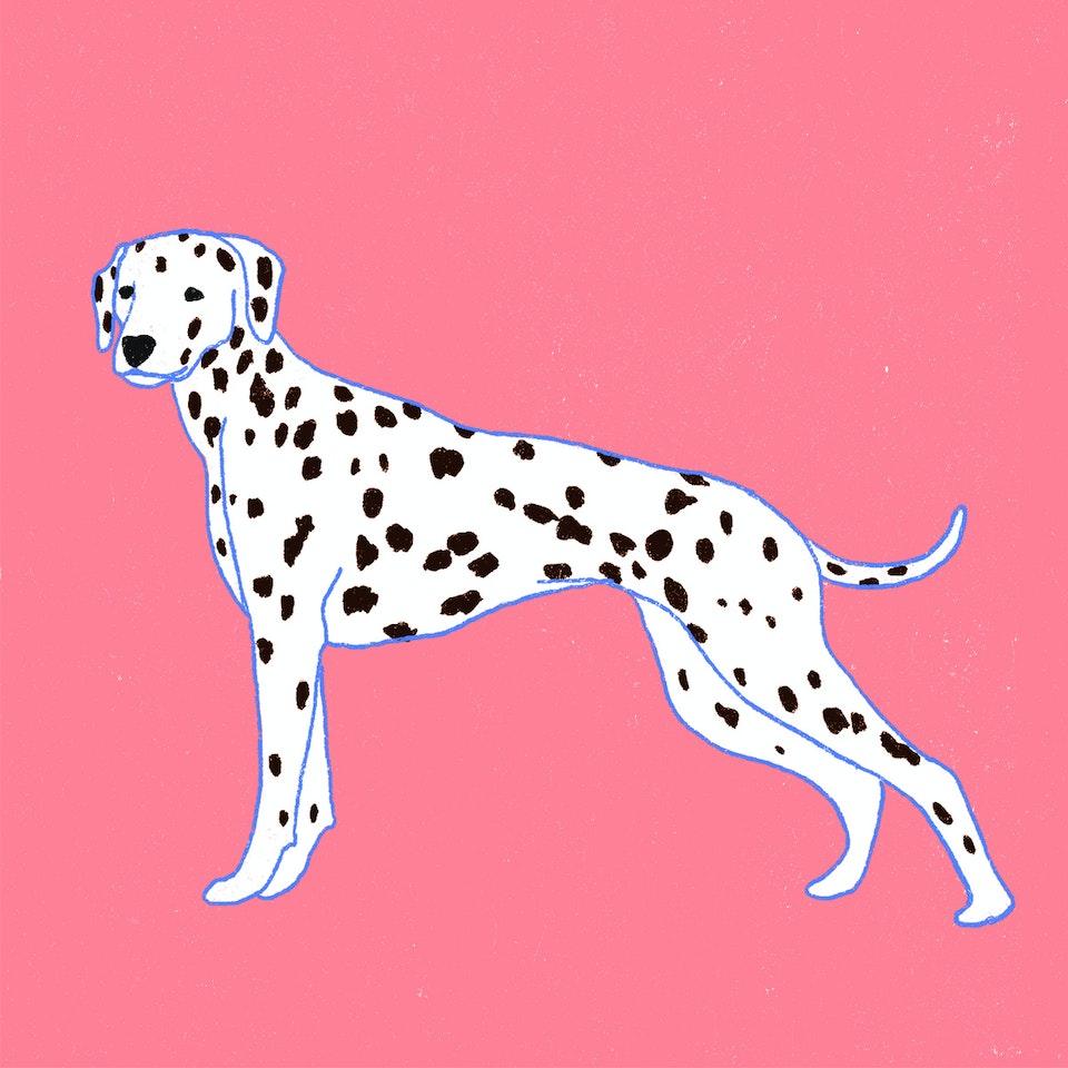 Dogs Milica-Golubovic-Dalmatian-dog-web