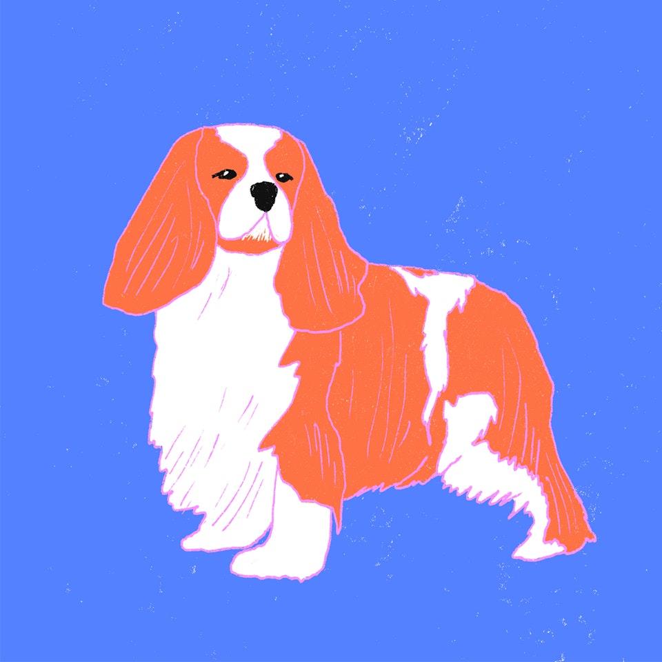 Dogs Milica-Golubovic-Spaniel-web